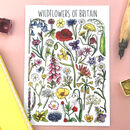 Wildflowers Of Britain Illustrated Postcard