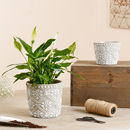 Dentelle Floral Patterned Planters