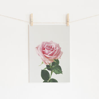 Spring Rose Photographic Flower Print