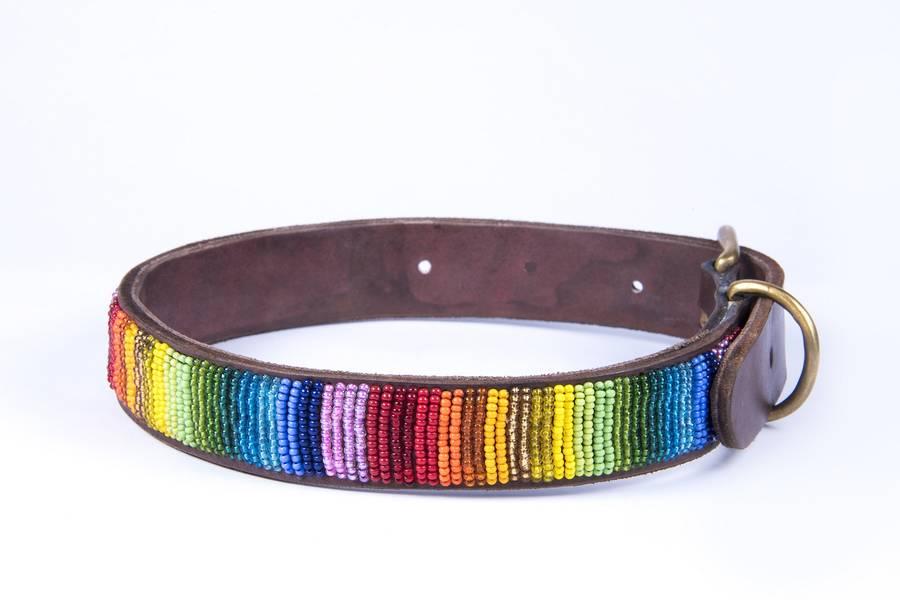 Blue Dog Collar Dog Collar