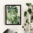 Monstera Deliciosa Botanical Print