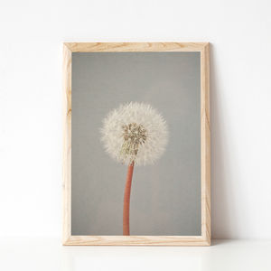 The Passing Of Time Photographic Dandelion Clock Print