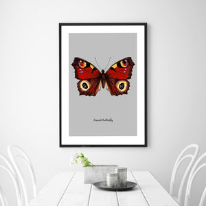 Peacock Butterfly Illustration Fine Art Print - animals & wildlife