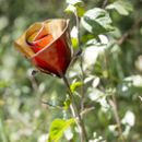 Red Rose Recycled Metal Garden Sculpture
