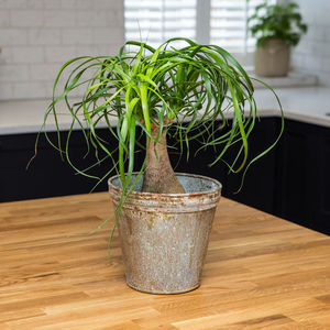 Planter No 165 Aged Zinc - hothouse wedding trend