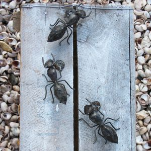Ant Handmade Recycled Metal Wall Art Set Of Three - art & decorations