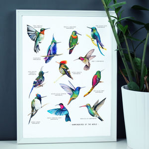 Bright Hummingbirds Of The World Print