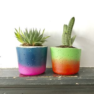 Handmade Tropical Concrete Plant Pot - gifts for her