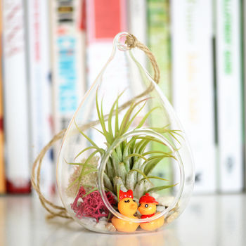 Air Plant Terrarium With Choices Of Figurines