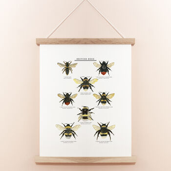 British Bees Illustrated Giclée Print