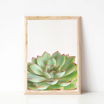 Green Succulent Photographic Plant Print