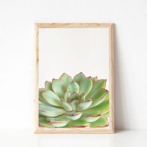 Green Succulent Botanical Photographic Print - still life
