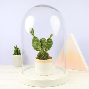 Glass Dome With Ceramic Base - styling your day sale