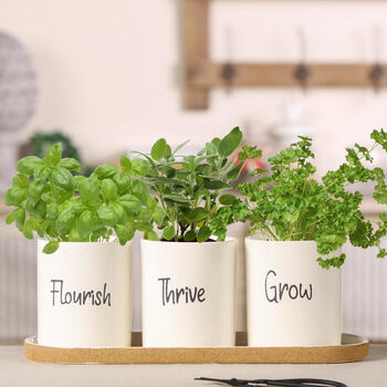 Flourish, Thrive, Grow Herb Pots On Tray