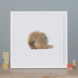 Illustrated Porcupine Print