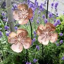 Copper Poppy Sculptures Set Of Three