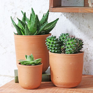 Curved Terracotta Plant Pot