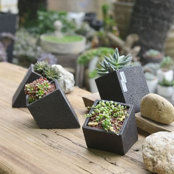 Concrete Hanging Planter With A Plant