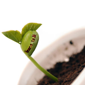Personalised Corporate Branded Message Seeds - seeds & bulbs