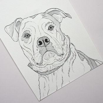 Personalised Pet Portrait Line Drawings
