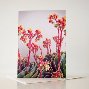 Succulent Plant Flowers Gardeners Birthday Card