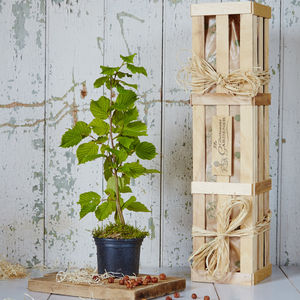 Hazel 'The Tree Of Protection' Gift - housewarming gifts