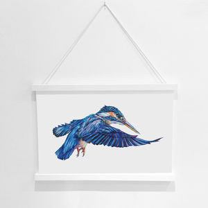 Kingfisher Bird Pencil Illustration Fine Art Print - animals & wildlife