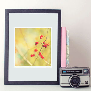 Nature Berries Fine Art Photography Print - new in prints & art