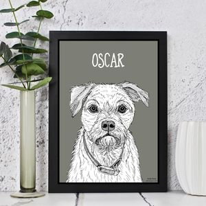 Border Terrier Print - animals & wildlife