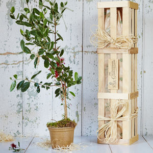 Feijoa 'The Fruit Salad' Tree Gift - 50th birthday gifts