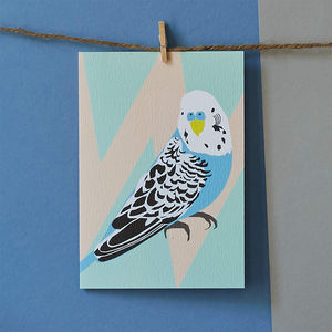 Ben The Budgie Bird Card - cards & invitations
