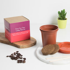 Grow Your Own Coffee Plant Kit - for him