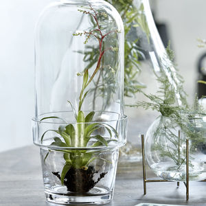 Glass Bell Jar Planter - home inspiration