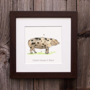Limited Edition Pig Print. Oxford Sandy And Black