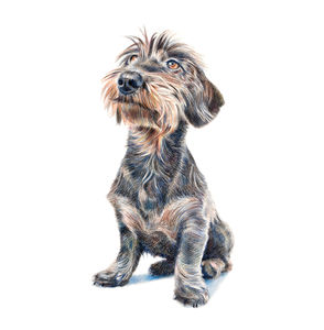 Personalised Pet Portrait Drawing Or Gift Voucher