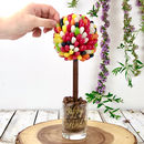 A Chocolate Tree Covered With Jelly Beans