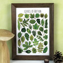 Tree Leaves Of Britain Wildlife Watercolour Print