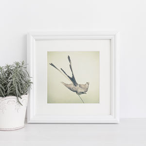Bird Study I Photographic Swallow Print