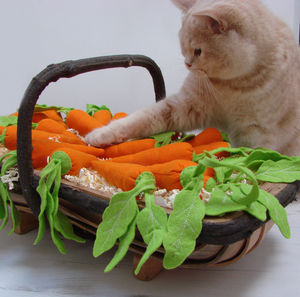 Catnip Carrots Cat Toys - cats