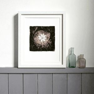 Wood Anenome Print - nature & landscape