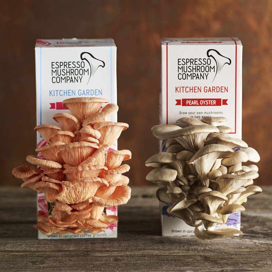 Kitchen Garden Mushrooms Gift Bundle For Mushroom Lovers By Espresso Mushroom Company