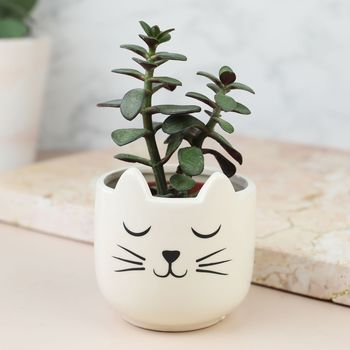 Set Of Two Cat's Whiskers Mini Planters