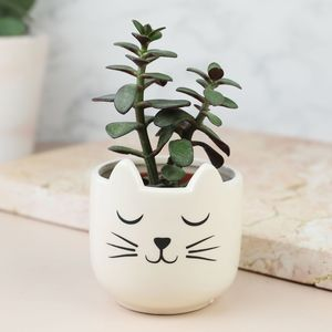 Set Of Two Cat's Whiskers Mini Planters - secret santa gifts