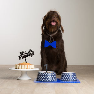 It's A Pawty Party Gift For Your Dog
