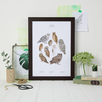 Owls Of The World Print