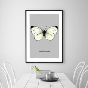 Small White Butterfly Illustration Fine Art Print - animals & wildlife
