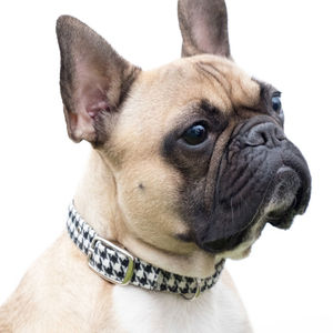 Houndstooth Dog Collar - dogs