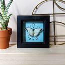 Miniature Framed Ethical Taxidermy