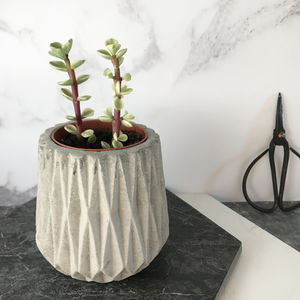 Concrete Mini Planter With Succulent - pots & planters