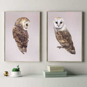 Barn Owls Pair Of Prints - drawings & illustrations